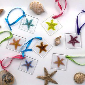 Sassy Starfish Fused Glass Sun Catcher Variety